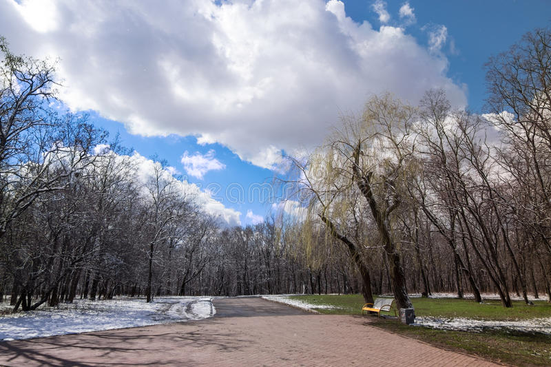 Border between winter and spring, left snow right green grass under trees. with asphalt stock image