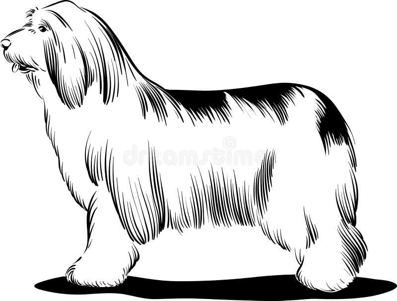 Borderes collie de los perros ilustración del vector