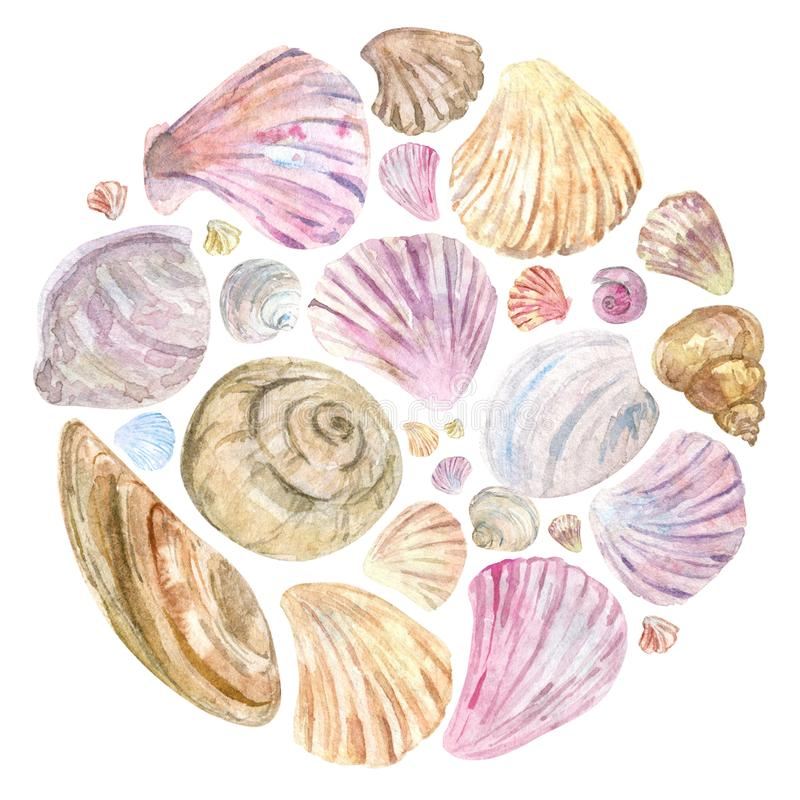 Colorful watercolor shells in round composition stock photos