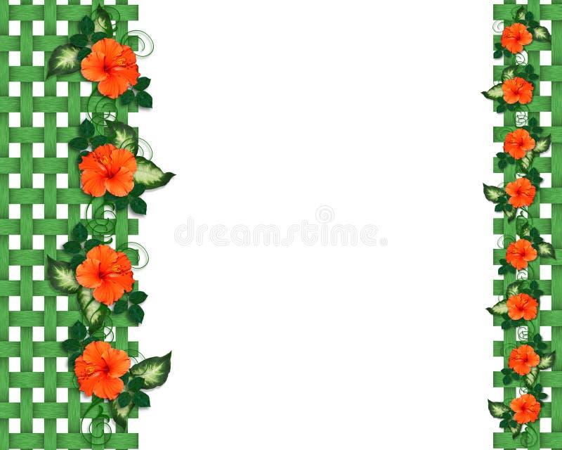 borders flowers hibiscus tropical иллюстрация вектора