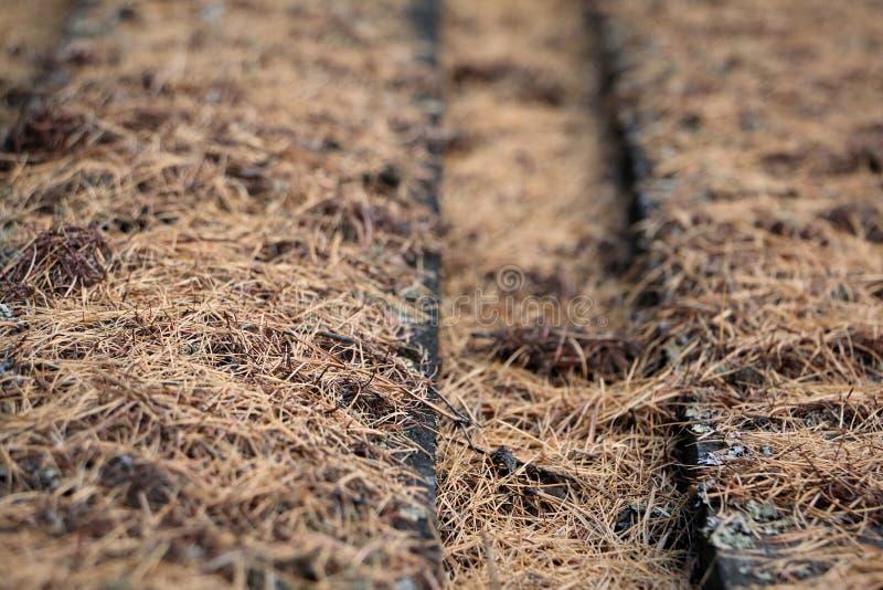 Bordi coperti di muschio asciutto, fondo rustico immagine stock libera da diritti