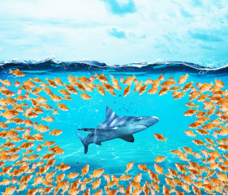 Bordi del gruppo dei pesci rossi lo squalo Il concetto di unità è forza, lavoro di squadra ed associazione fotografia stock libera da diritti