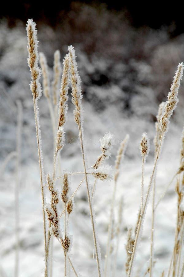 Bordi di gelo del Hoar fotografie stock libere da diritti