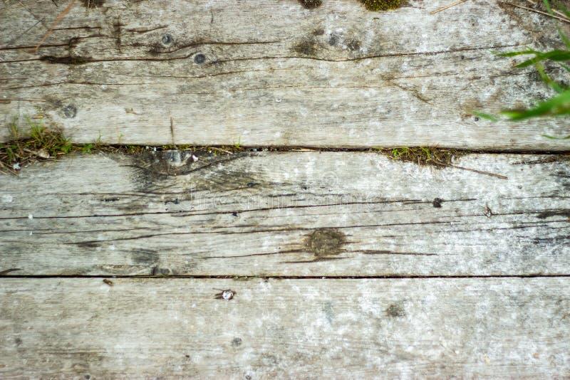 Bordi di legno grigi anziani con le crepe ed il muschio Priorit? bassa dell'annata fotografia stock
