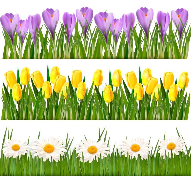 Bordi freschi del fiore e della sorgente illustrazione vettoriale