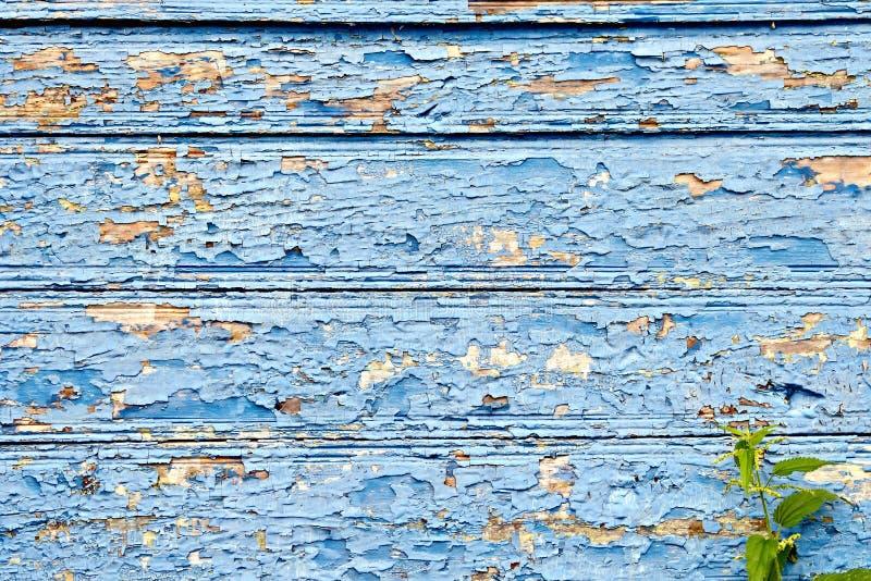 Bordo anziano con la pelatura pittura e delle ortiche blu fotografia stock