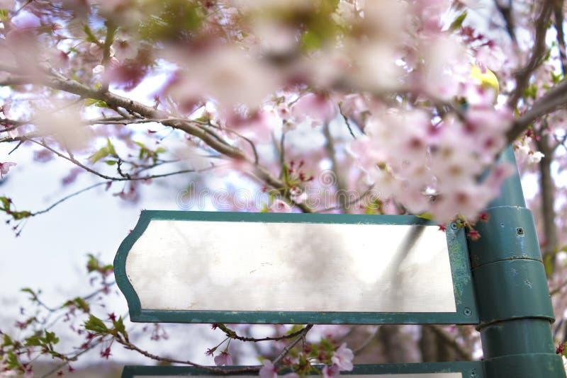 Bordo in bianco dell'insegna luminosa ad un marciapiede con il fondo di Sakura immagini stock