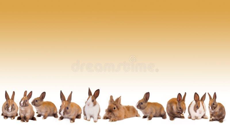 Bordo del coniglio di coniglietto di pasqua immagine stock libera da diritti