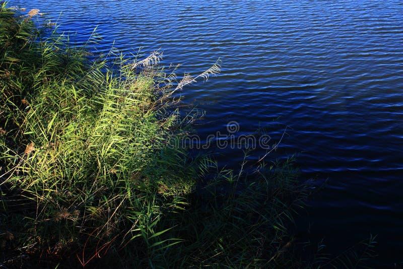 Bordo del lago immagini stock libere da diritti