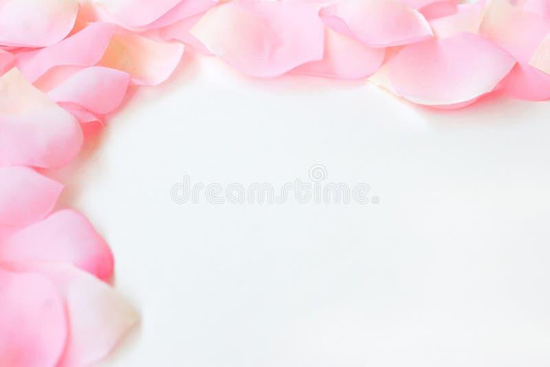 Bordo del petalo di Rosa fotografie stock libere da diritti