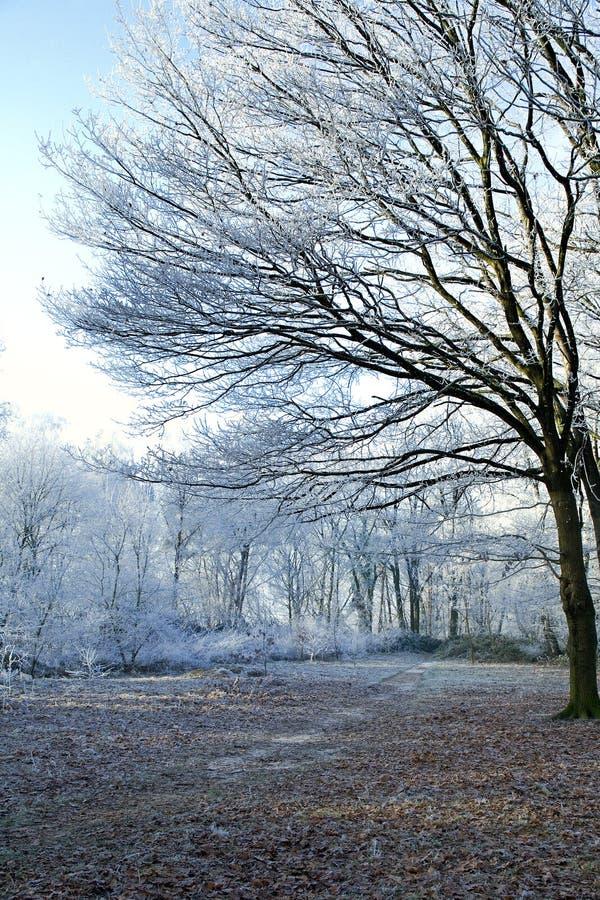Download Bordo Della Foresta Di Inverno Immagine Stock - Immagine di alberi, paesaggio: 3891107