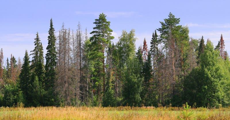 Bordo della foresta verde con gli alberi morti immagini stock