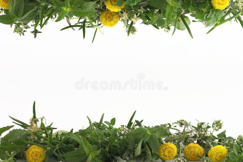 Bordo delle erbe immagini stock