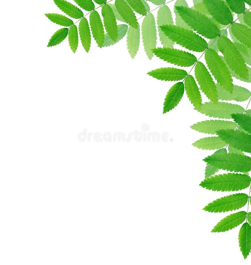 Bordo delle foglie verdi fotografia stock