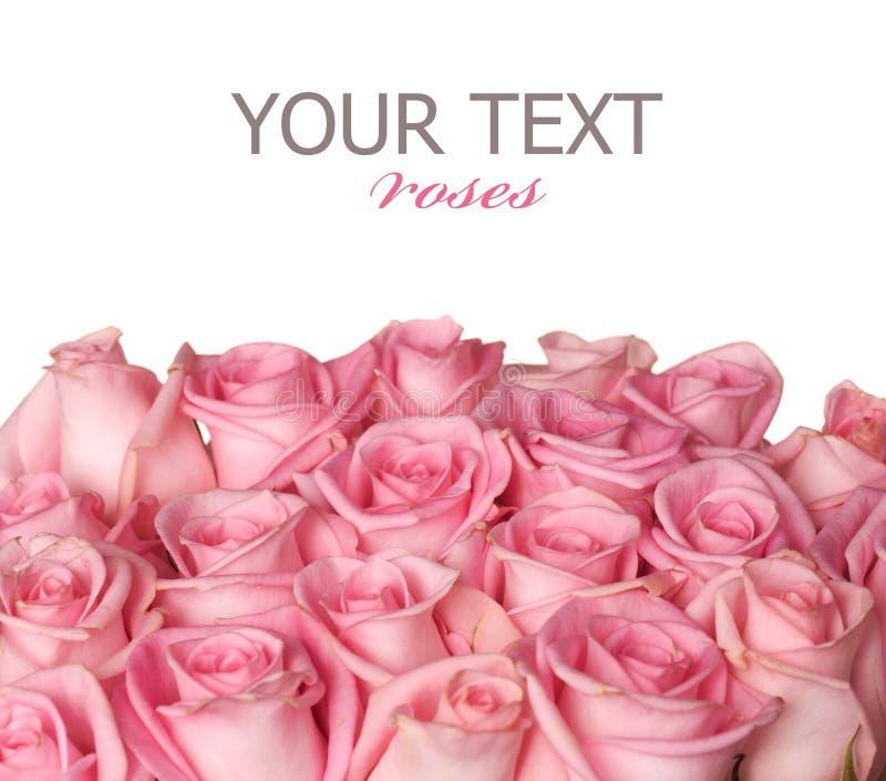 Bordo delle rose fotografia stock