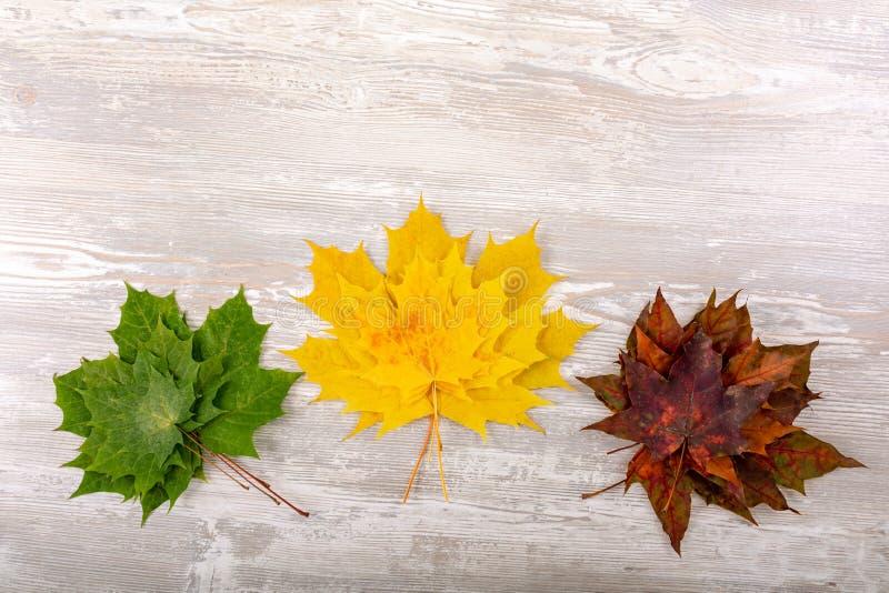 Bordo di autunno dalle foglie di acero cadute su vecchia priorità bassa di legno fotografie stock
