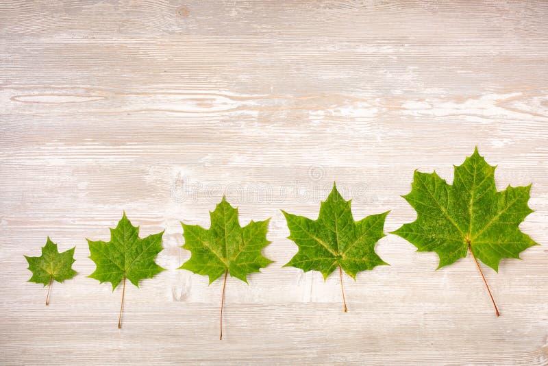 Bordo di autunno dalle foglie di acero cadute su vecchia priorità bassa di legno fotografia stock