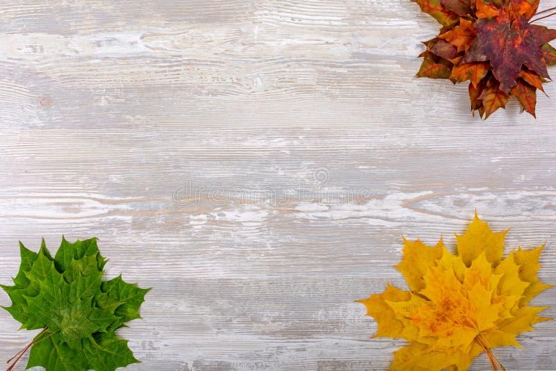 Bordo di autunno dalle foglie di acero cadute su vecchia priorità bassa di legno immagini stock libere da diritti