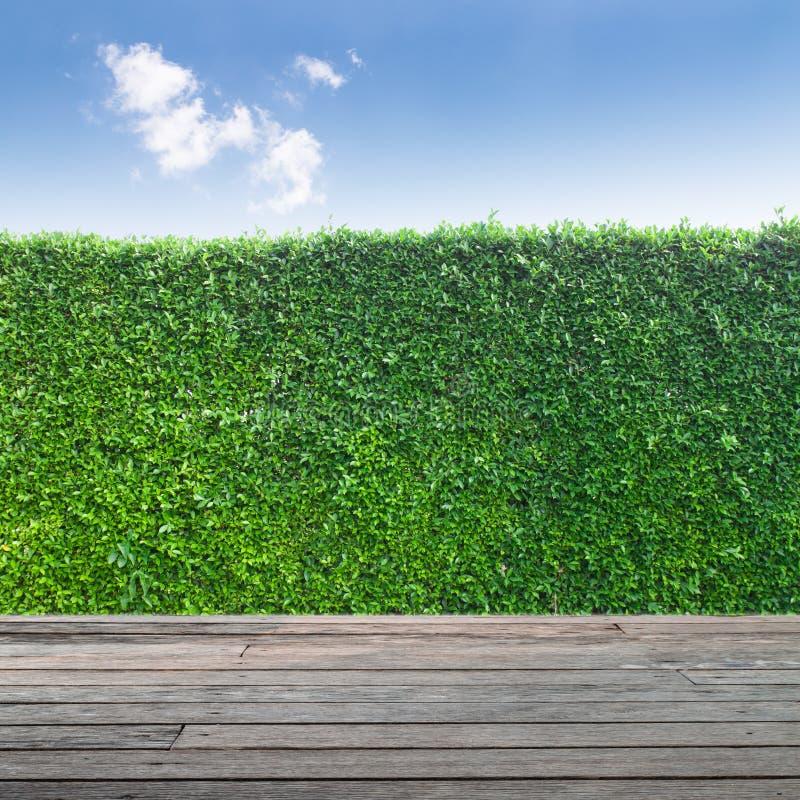 Bordo di legno in campo e cielo di erba immagine stock