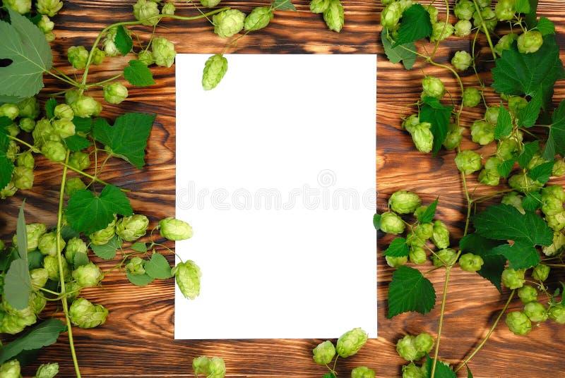 Bordo di legno con il foglio bianco per la vostra iscrizione, struttura del luppolo verde Fondo per i festival di birra immagine stock libera da diritti