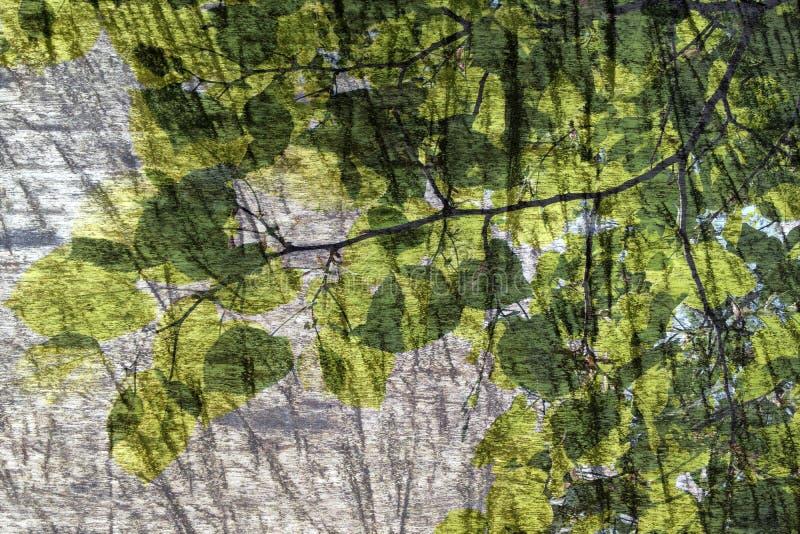 Bordo di legno e ramo di albero con le foglie fotografia stock libera da diritti
