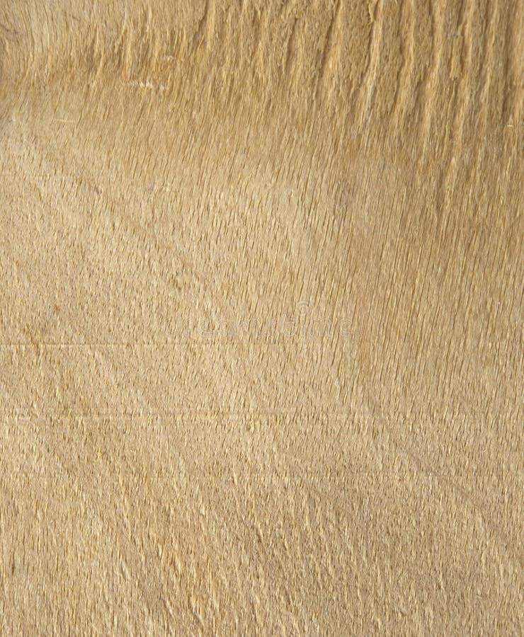 Bordo di legno leggero fotografia stock libera da diritti