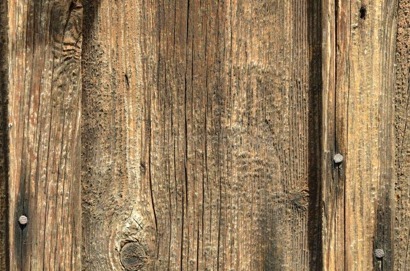 Bordo di legno senza pittura con i chiodi del ferro, struttura fotografia stock libera da diritti