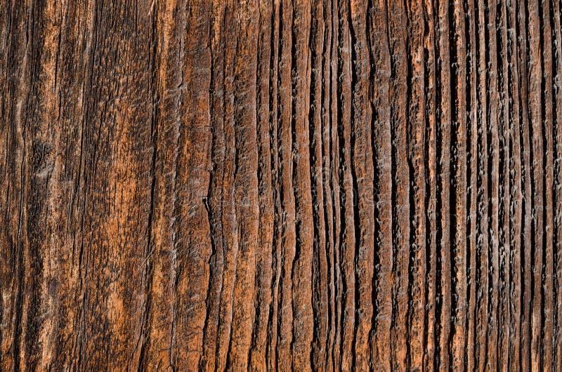 bordo di legno utdated con sbiadire i fungino e le cavità di malattia fotografie stock libere da diritti