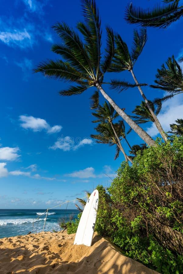 Bordo di spuma che pende su contro un albero sulla spiaggia di tramonto, riva del nord di Oahu, Hawai fotografie stock