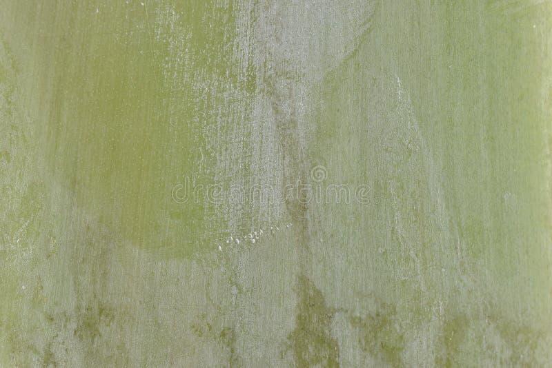 Bordo di struttura del modello del fondo della foglia di verde del dettaglio della natura fotografia stock