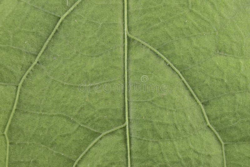 Bordo di struttura del modello del fondo della foglia di verde del dettaglio della natura fotografie stock libere da diritti