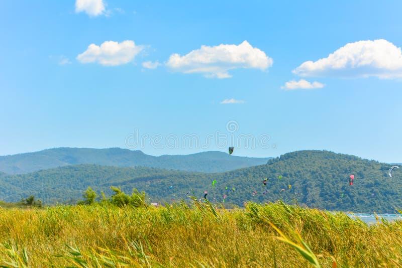 Bordo giallo delle erbe, delle nuvole, del cielo e dell'aquilone fotografia stock libera da diritti