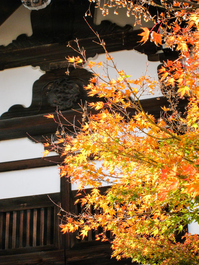 Bordos amarelos de brilho em Tenryuji, Kyoto imagens de stock