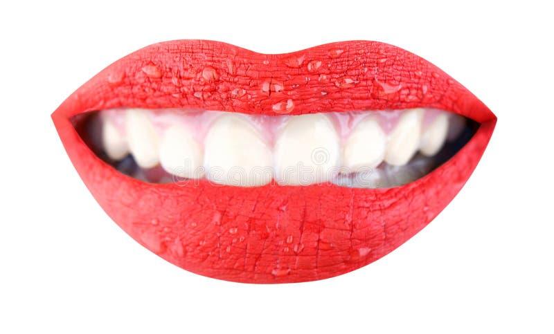 Bordos vermelhos, composição bonita, boca sensual, bordo, sorriso Bordos sensuais da beleza, bordo bonito, batom brilhante foto de stock royalty free