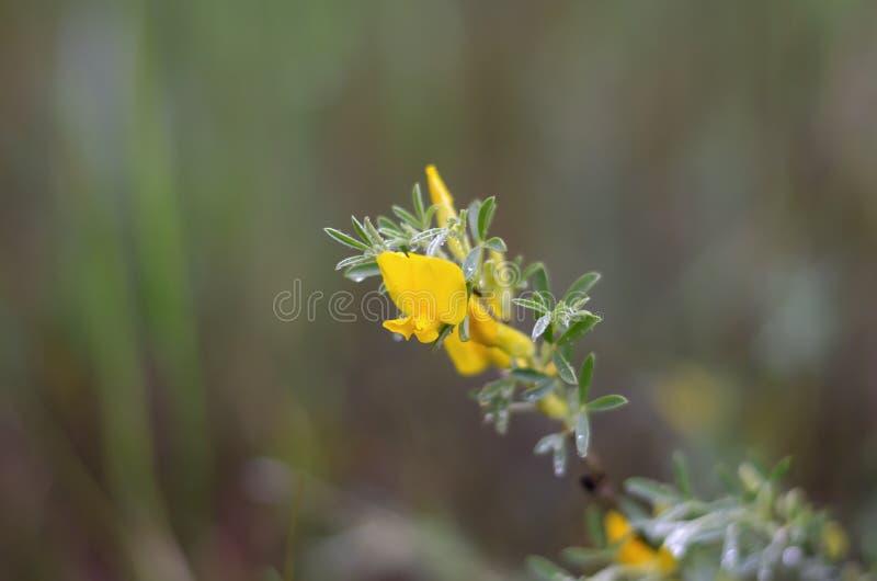 Bords brouillés en gros plan de fleur jaune images libres de droits