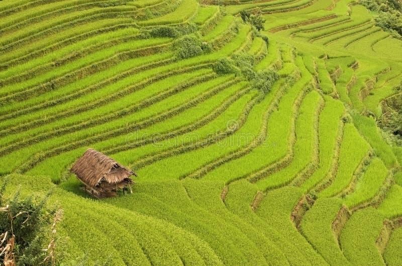 Bordures de hutte par des terrasses de riz photos libres de droits