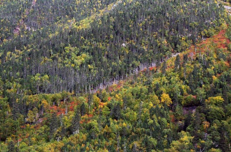 Boreaal bos in de herfst stock afbeelding