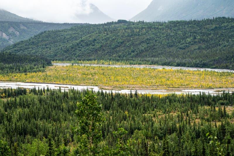 Boreaal bos in vroege stadia van dalingskleuren langs de mening van de Mantanuska-Rivier van het Mantanuska-gletsjergebied royalty-vrije stock afbeelding