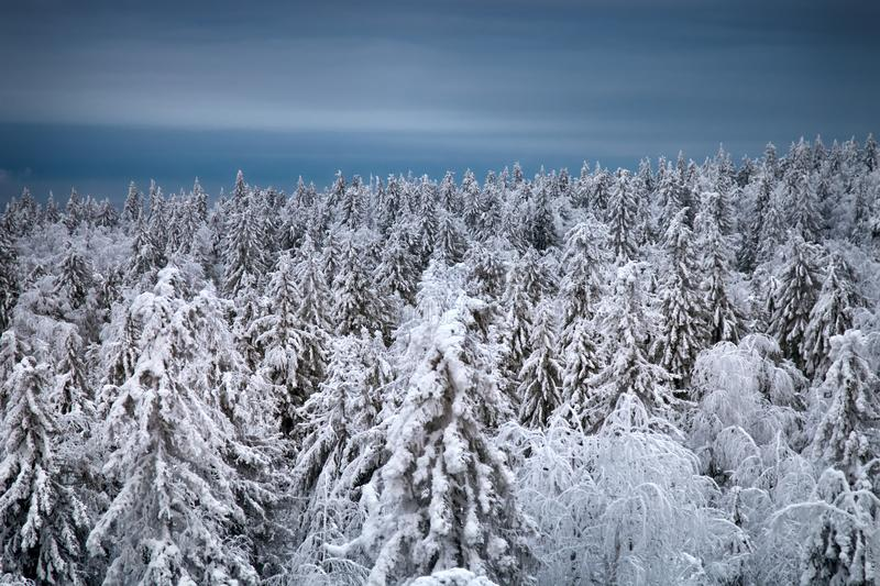 Boreal coniferous forest. Top view royalty free stock images