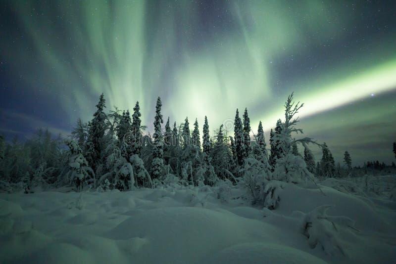 Borealis αυγής (βόρεια φω'τα) δάσος της Φινλανδίας, Lapland στοκ εικόνα