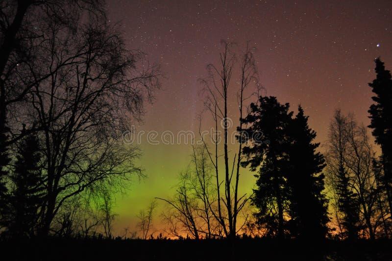 Borealis van de dageraad stock foto