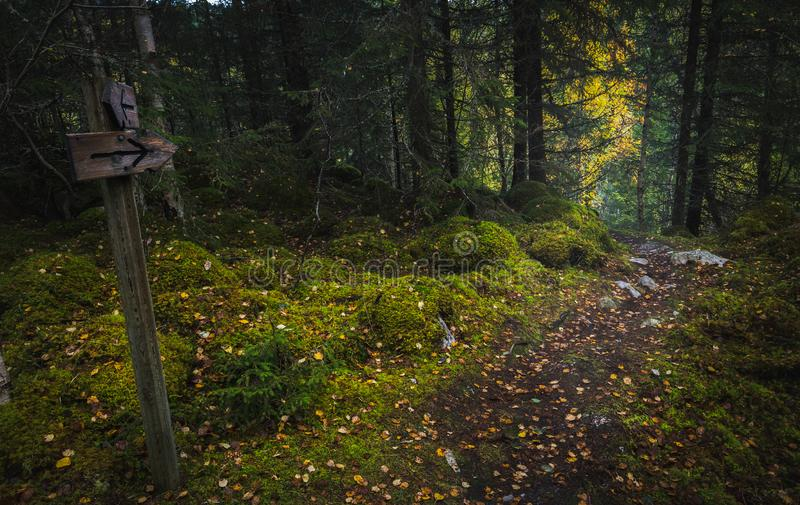 Borealna lasowa podłoga Mechata ziemia i światło ciepły, jesienny, Norwescy lasy obrazy stock