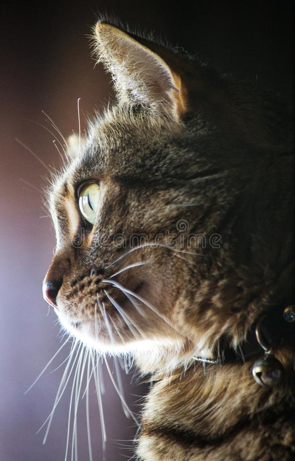 Bored Cat watching birds royalty free stock photography