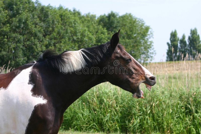 Bored horse royalty free stock photography