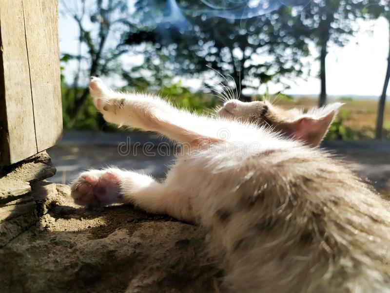 A bored kitten in the morning stock image