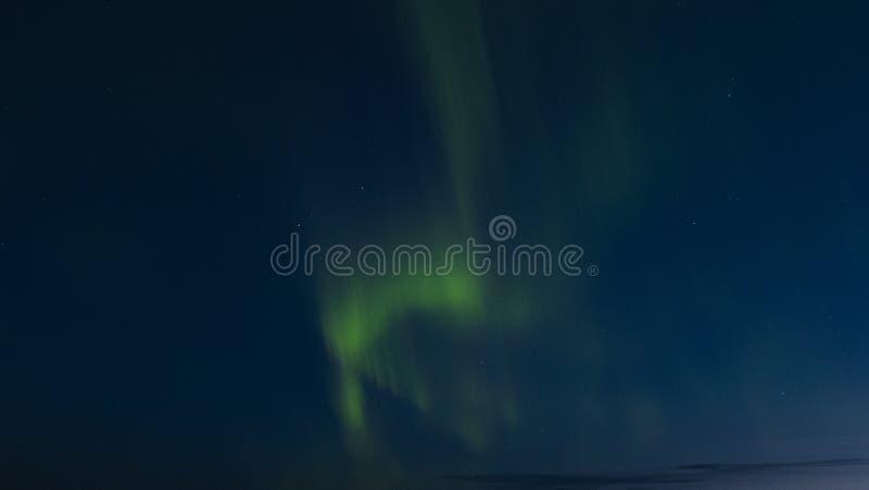 Borelias dell'aurora in Lapponia svedese fotografia stock