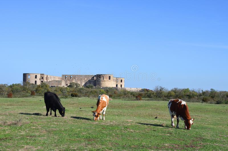 Borgholm Castle at the island oland. In the autumn stock photos