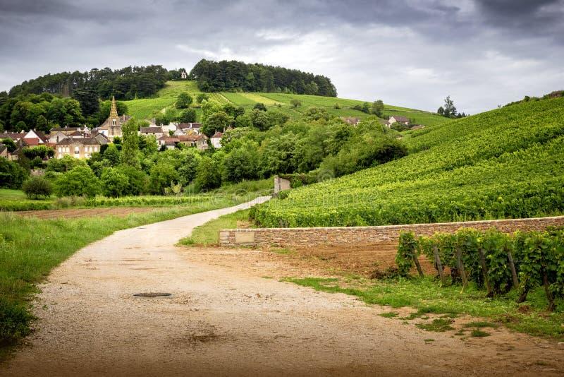 borgonha Estrada nos vinhedos que conduzem à vila de Pernand-Vergelesses em CÃ'te de Beaune france imagens de stock