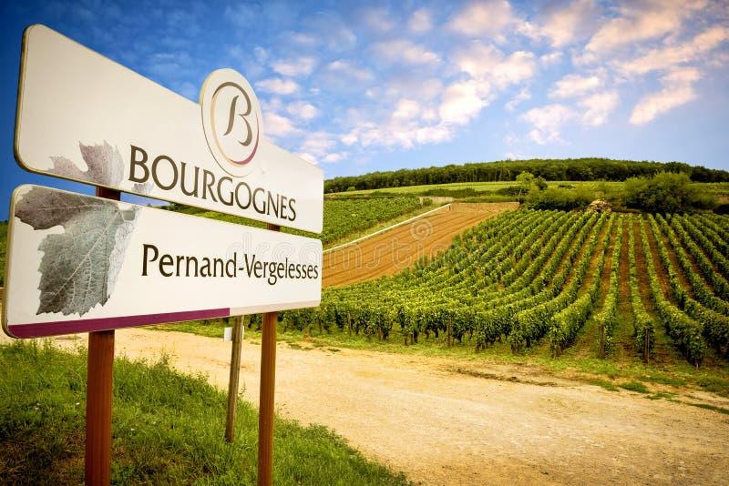 Borgonha, vinho de Pernand-Vergelesses é produzida na comuna de Pernand-Vergelesses em CÃ'te de Beaune france imagem de stock
