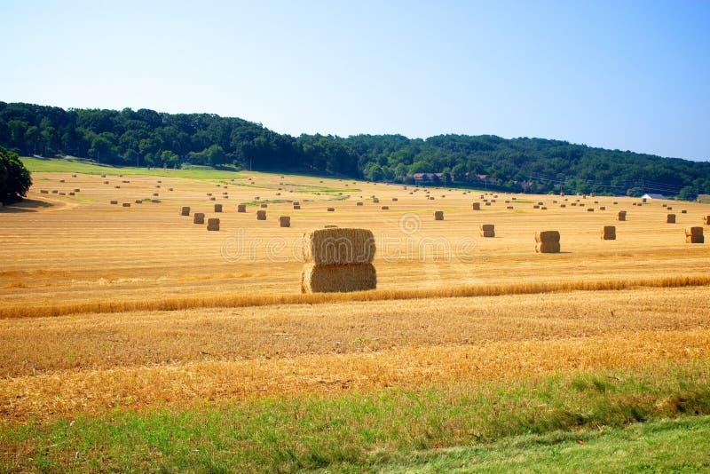 Borgtocht van hooi op landbouwbedrijfland stock afbeelding